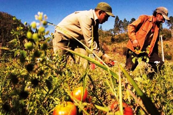 El Día del Campesino en Cuba motiva compromisos con la producción