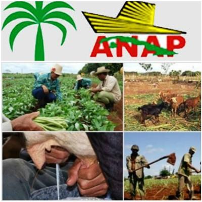 Reconocen desempeño de campesinos camagüeyanos