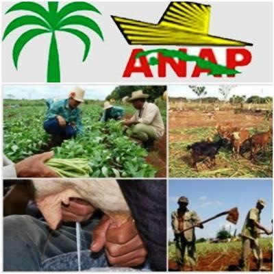Comprometida Agricultura camagüeyana con mayores retos productivos