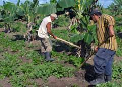 Cuba: Actualizan objeto social de cooperativas agropecuarias