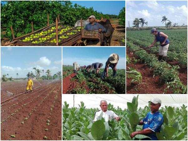 Campesinos camagüeyanos ratifican compromiso productivo con el pueblo (+Audio y Fotos)