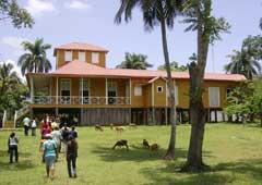 Cuba: El árbol más viejo de Birán lucirá también cintas amarillas