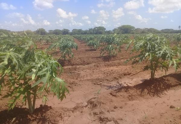 Consejo de Defensa Provincial comprueba en el terreno la producción de alimentos (+ Fotos)