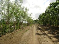 La moringa oleífera: recurso con muchas opciones