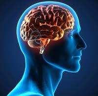 Scientifiques développent une biopsie pour diagnostic précoce de la maladie de Parkinson