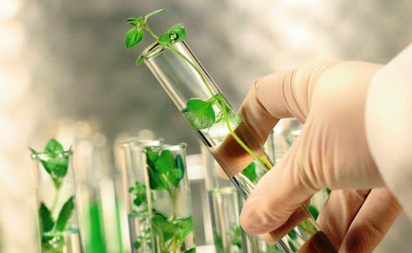 Ciencia y tecnología en función de las producciones agrícolas en la región