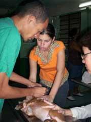 Laboratorio de Medicina Tradicional y Alternativa protege en Camagüey salud de  masa animal