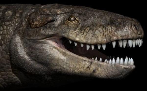 Hallan en Madagascar cocodrilo con dientes de dinosaurio