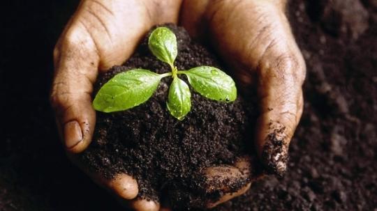 Impulsan Cuba y República Checa cooperación en sector agrícola