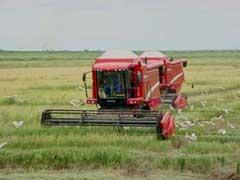Comenzó en Camagüey cosecha arrocera