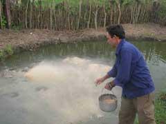 Fomentan cría artificial de peces en Vertientes