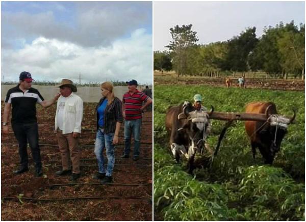 Les pôles de production de Camagüey fournissent de la nourriture et des exportations