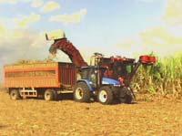 Cobra impulso cultivo de caña en tierras de Vertientes