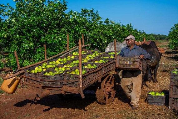Sobresale empresa camagüeyana de Frutas Selectas entre sus similares del país