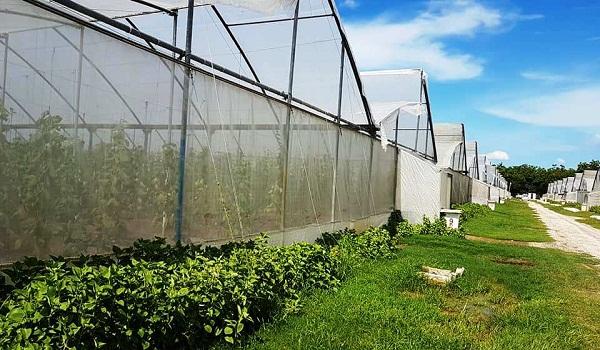 Casas de cultivo tapado en Las Flores.