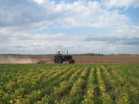 Garantizados en Camagüey recursos para la siembra de cultivos varios