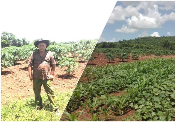 Sector agropecuario por fortalecer el programa de autoabastecimiento territorial (+ Audio)