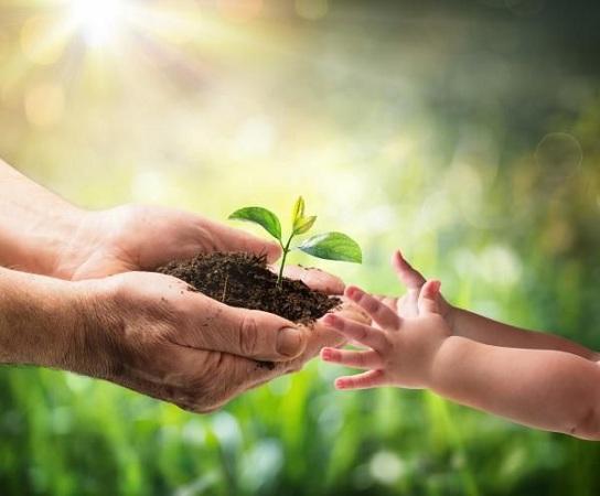 Reforestar es asegurar el futuro