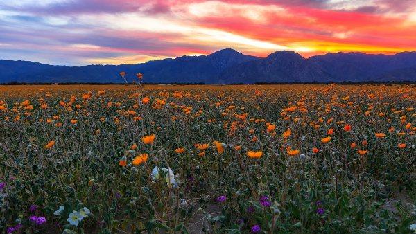 Maravilla natural cubre paisaje silvestre de California