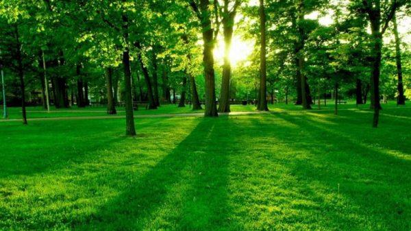 Según estudio, la Tierra tiene más bosques ahora que 35 años atrás