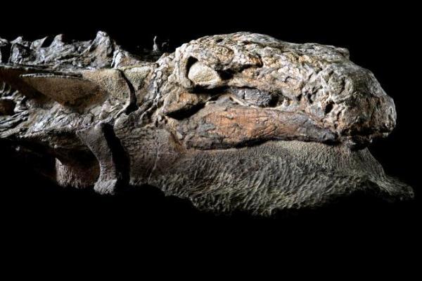 Publican fotos de fósil de dinosaurio en excelente estado de conservación
