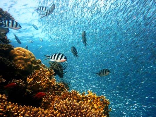 Desaparecerán en el futuro depredadores de los océanos