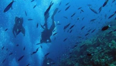 Reconocen a científicos cubanos con Premio Ciencias del Mar
