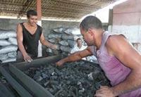 Unidad Silvícola de Florida con favorables resultados en producción de carbón