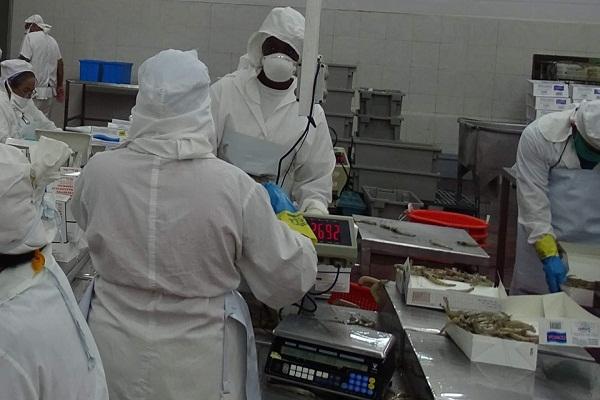Desde el norte camagüeyano aseguran la producción de alimentos en medio de pandemia