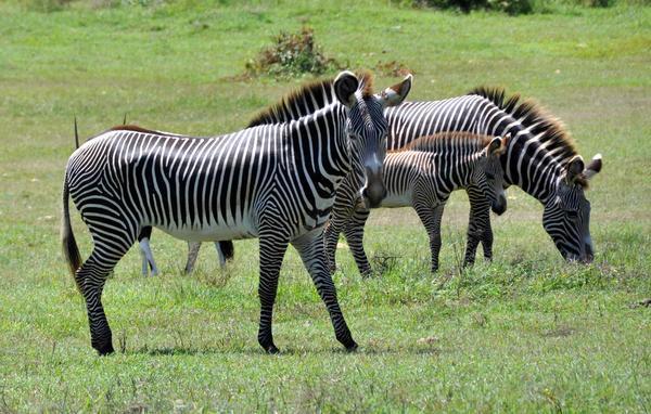 Reconocen en Cuba protección de animales donados por Namibia