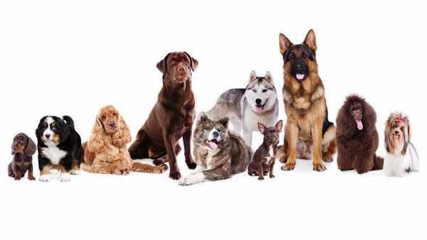 Diseñan el mayor mapa evolutivo de razas de perros