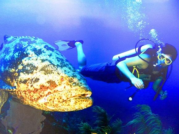 Universo subacuático de Cuba en exposición de fotógrafo camagüeyano (+ Fotos)