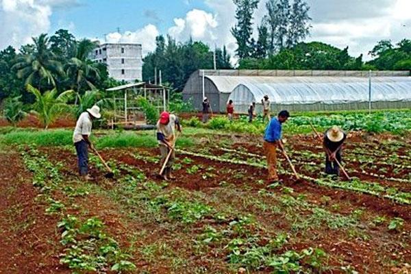 Cuba potencia respuesta ante emergencias alimentarias