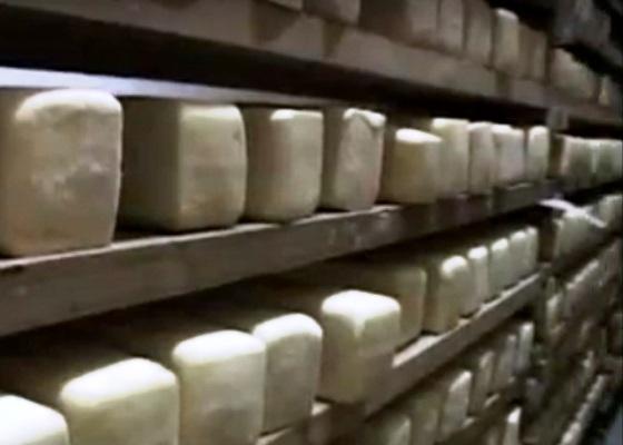 Nuevas líneas estimulan la producción en fábrica de queso de Sibanicú