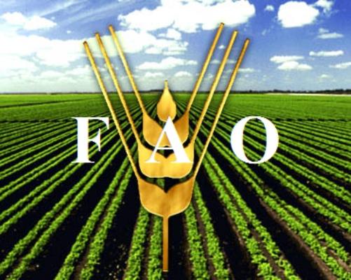 Advierte FAO riesgos del cambio climático para la seguridad alimentaria
