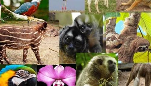 Acoge Johannesburgo encuentro mundial sobre vida silvestre