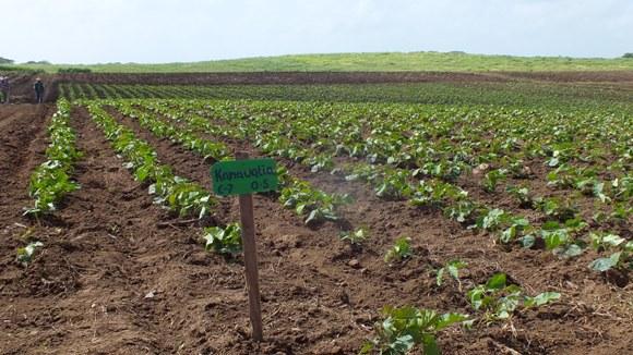En Guáimaro, decisivo aporte a la agricultura y la producción de alimentos