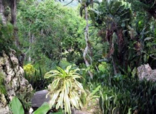 En peligro de extinción numerosas especies de la flora cubana