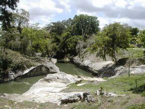 Proponen en Cuba iniciativa para el mantenimiento y manejo sustentable de especies propias