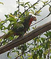 Orígenes de la flora y la fauna en Cuba