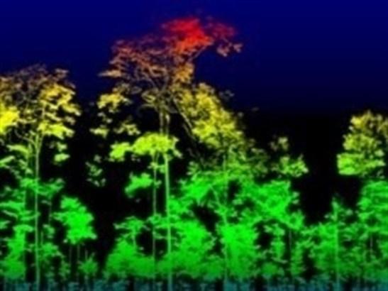 Pesan árboles con tecnología láser, sin cortarlos