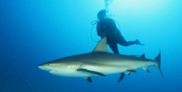 Buzo cubano coloca señal satelital dentro de un tiburón