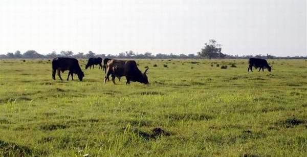 Promueve Camagüey programa de seguridad alimentaria para la ganadería