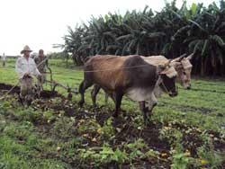 Incrementa Camagüey prácticas agroecológicas