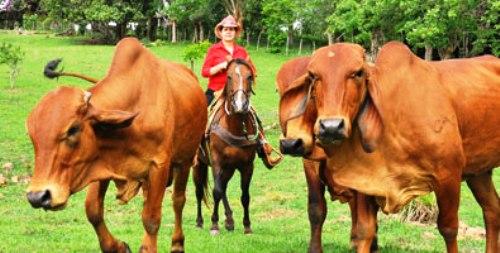 Abogan en Camagüey por mayor inclusión de la mujer en sector ganadero
