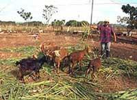 El proyecto incluye la garantía de alimento para los animales.