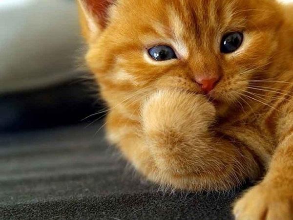 Los gatos sufren de ansiedad al separarse de sus dueños