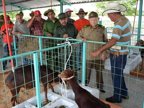 Evalúa Guillermo García Frías en Camagüey programa de desarrollo ovino-caprino (+ Fotos)