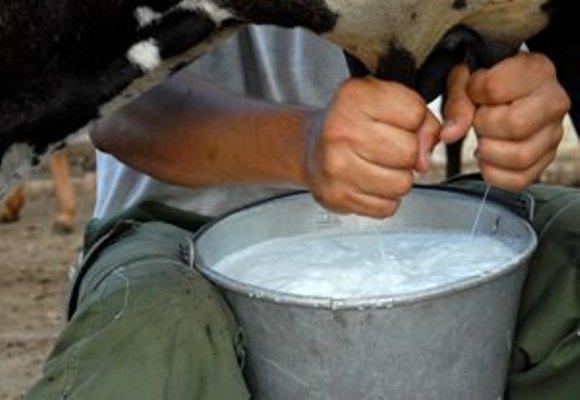 Camagüey tiene este año seis cooperativas millonarias en la producción de leche