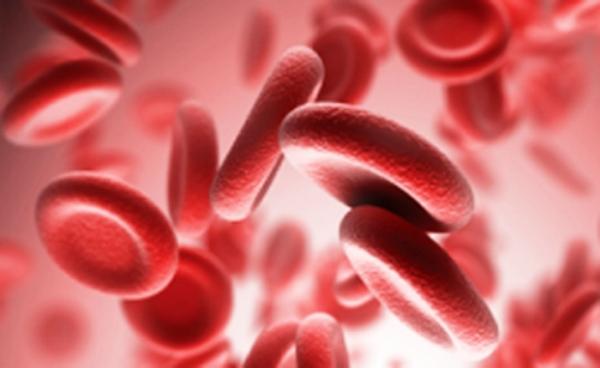 Fructífero intercambio en Cuba sobre enfermedades hematológicas